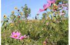 Wiesenblumen Gartenschau Bad Herrenalb 2017