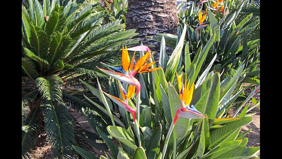 Auch zur kühleren Jahreszeit blüht es an der Costa Daurada.