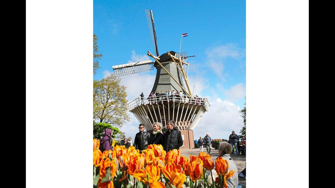 Auf dem Keukenhof bei Amsterdam blühen viele Millionen Tulpen.