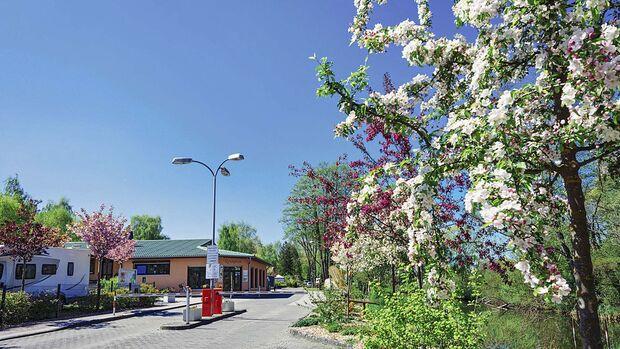 Blütencamping Riegelspitze