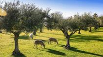 Camping-Reise Extremadura