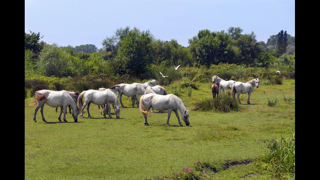 Caravan Südfrankreich Camargue
