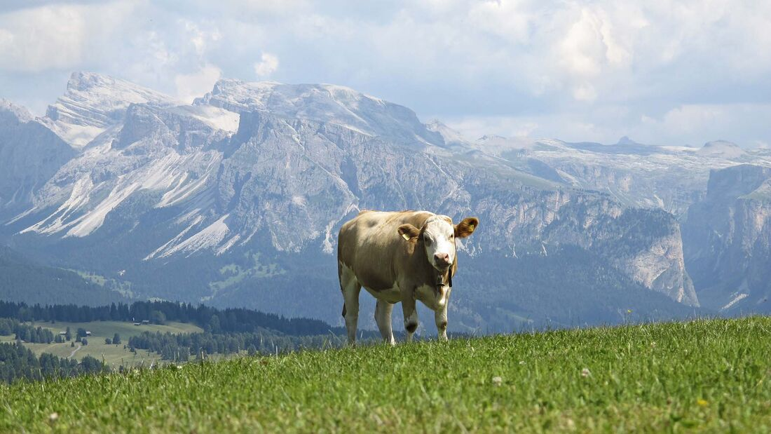 Clever Campen Seiser Alm
