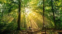 Dieser lichte Wald liegt in der Nähe des Großen Stechlinsees.