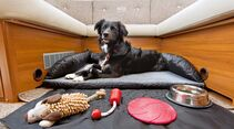 Ein bequemer Rückzugsort ist auch im Urlaub wichtig für den Hund.