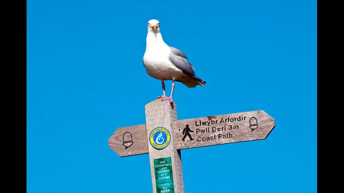 Eine Möwe hat auf einem Hinweisschild für Wanderer Platz genommen.