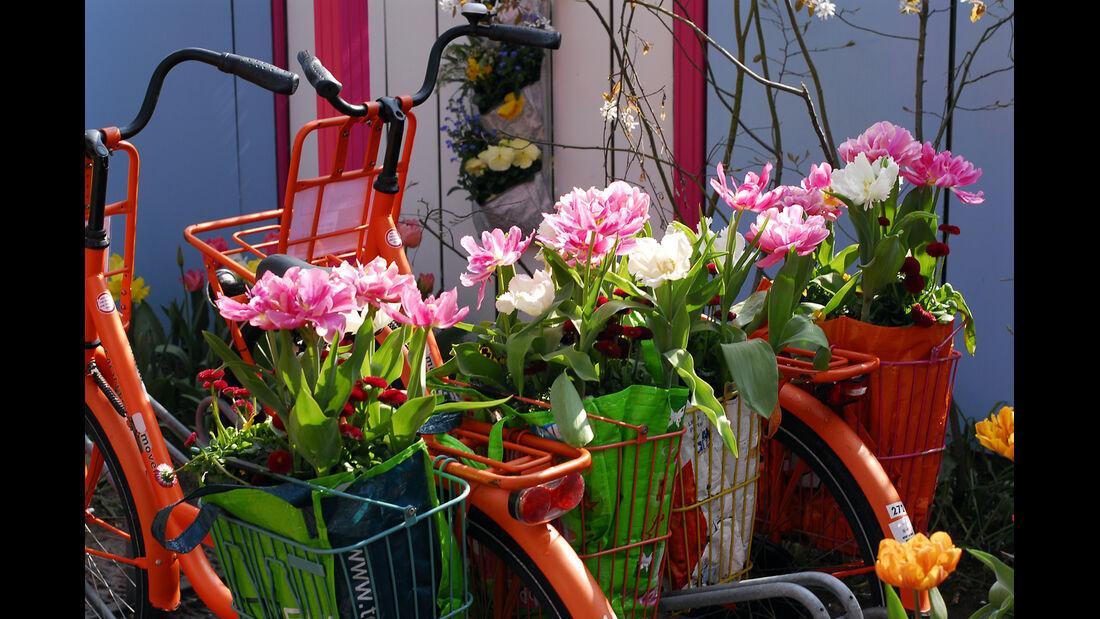 Fahrrad, Blumen