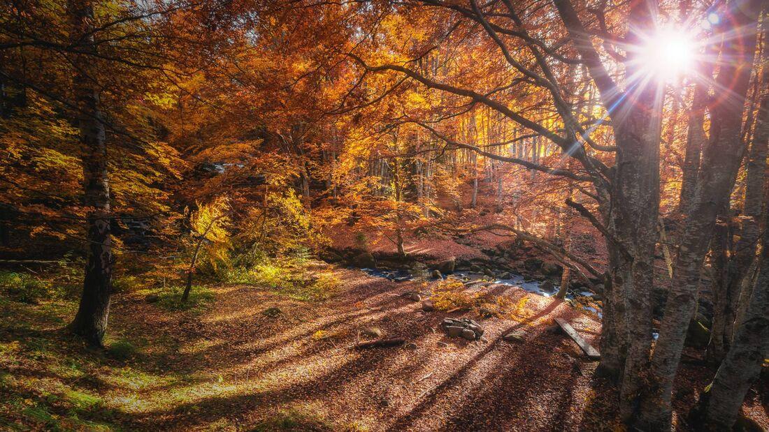 Herbstziele
