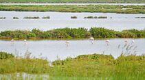 Italiens größte Flamingo-Kolonie in den Valli di Comacchio