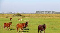 Pferde und Kühe teilen sich die große Koppel in der Nähe von Otterndorf.
