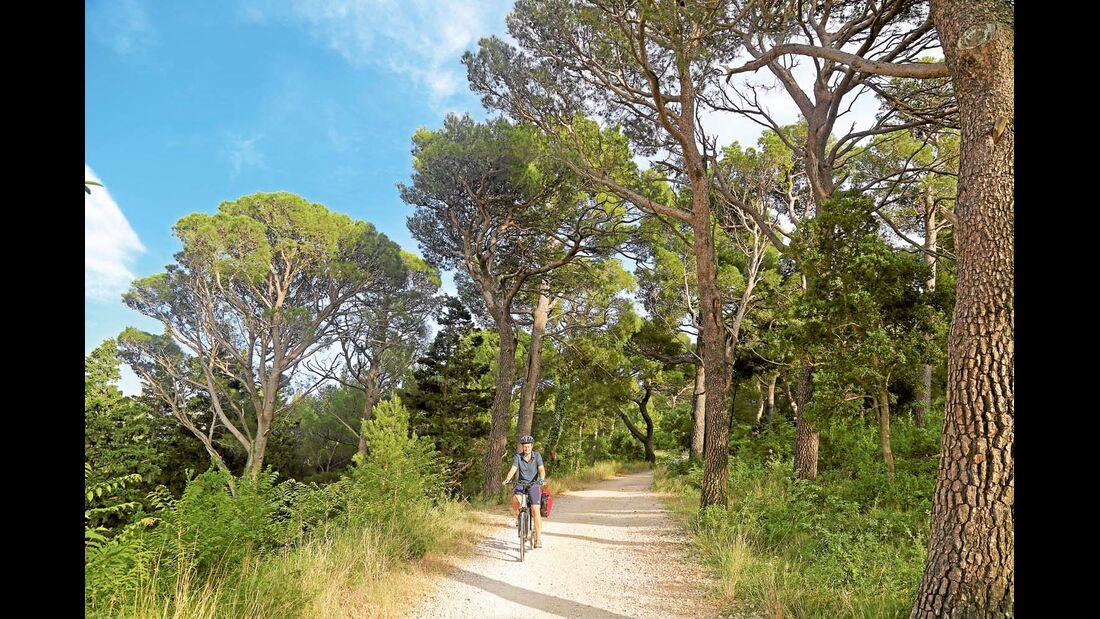 Pinienwälder