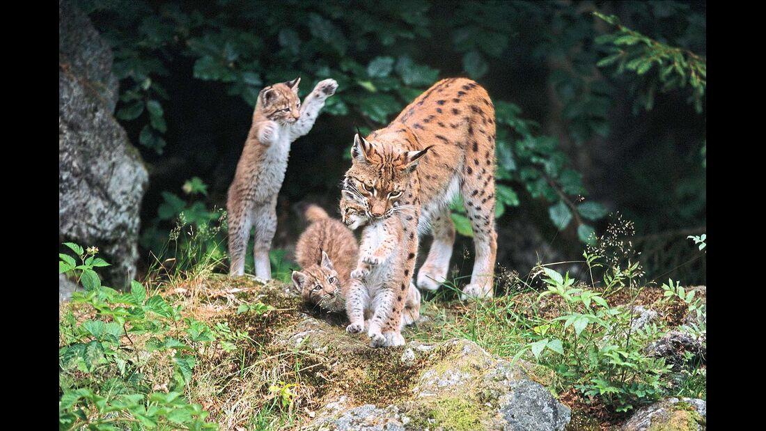 Probleme mit Wilderern gibt es in der Nationalparkregion bis heute