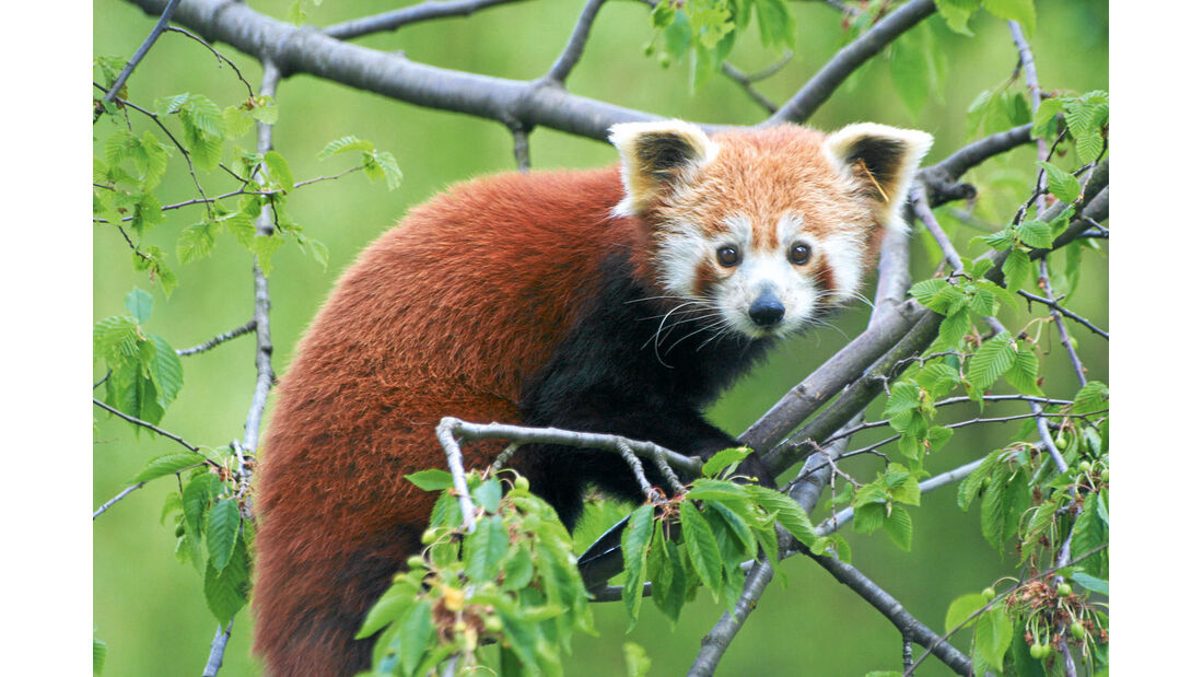 Reise-Service: Ausflugsziele, Panda
