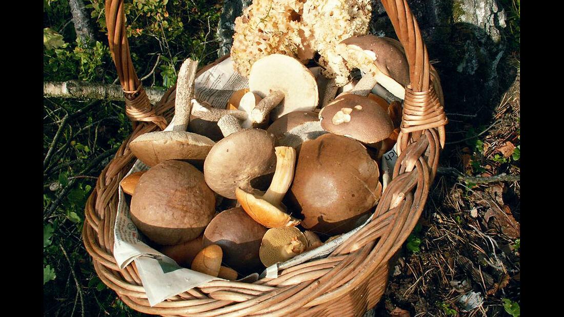 Röders' Park Korb mit Pilzen