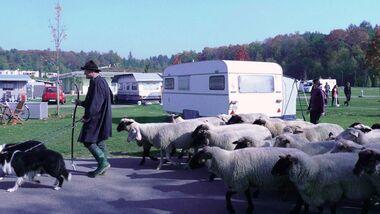 Schäferfest auf dem Campingpark Orsingen