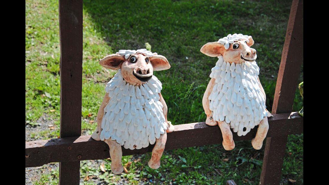 Schafsköppe bei Osterode