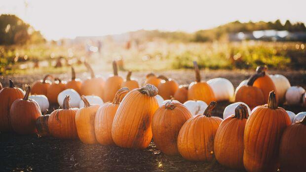 Tipps Herbstausflüge