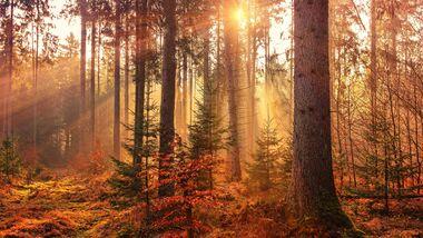 Tipps für den Herbst