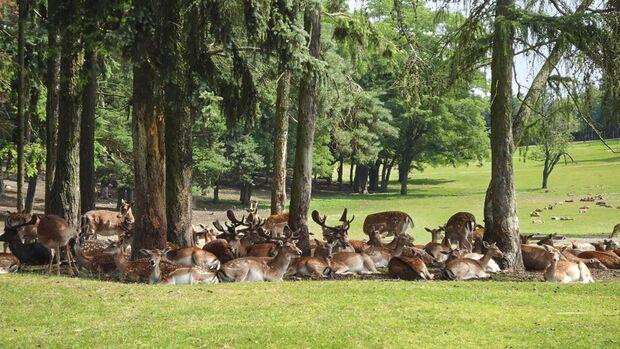 Wildpark Johannismühle