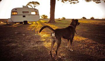 Wohnwagen mit Hund