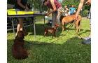 promobil mit Hund
